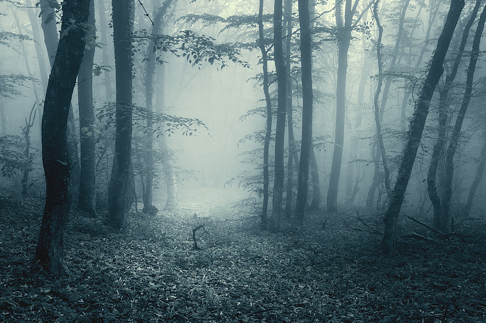 Rockford Forest Named One of the Creepiest in Illinois