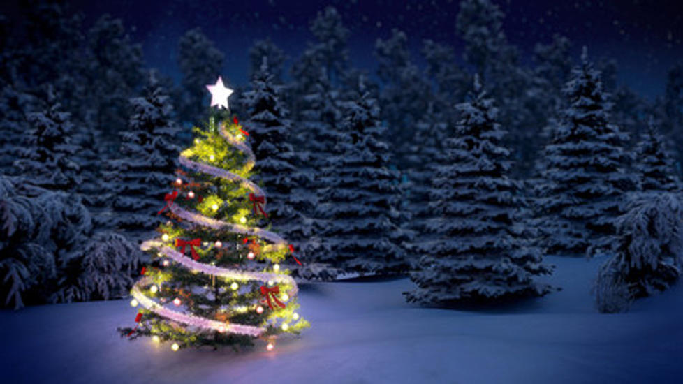 8 places to pick the perfect christmas tree in rockford - Best Place To Buy A Christmas Tree