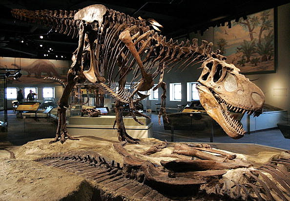 Field Museum Invites Illinois Families To 39 Doze With Dinos 39