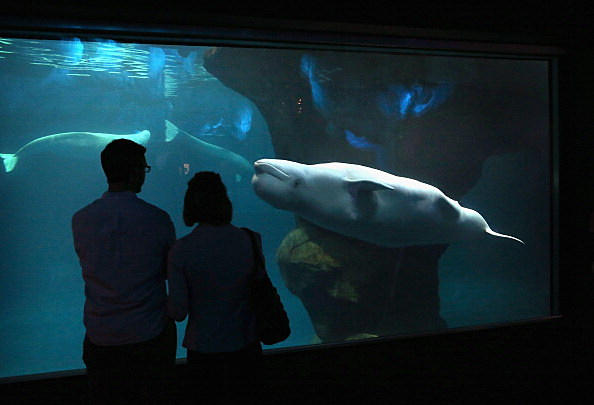 proposed shedd aquarium price change may affect visitors