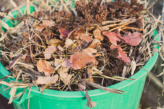 Rockford Yard Waste Pick Up Return Date has Been Set