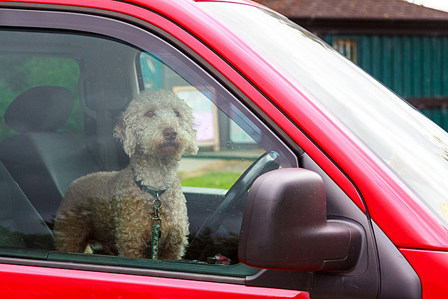 Wisconsin Store Solves Dogs Left In Hot Cars Dilemma