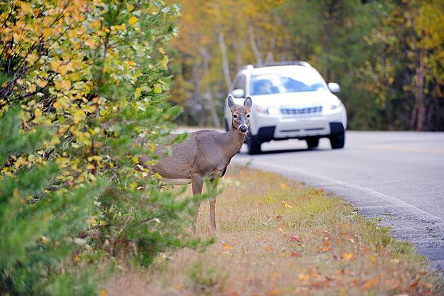 Ways To Avoid Hitting a Deer on Illinois Roads